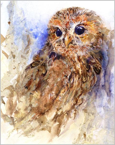 Jan Harbon gall_tawny_owl