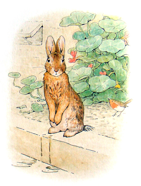 the_tale_of_peter_rabbit_221