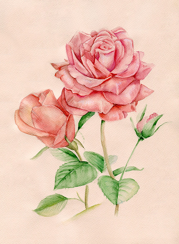 roses_by_emmatyan-d4a3ioe